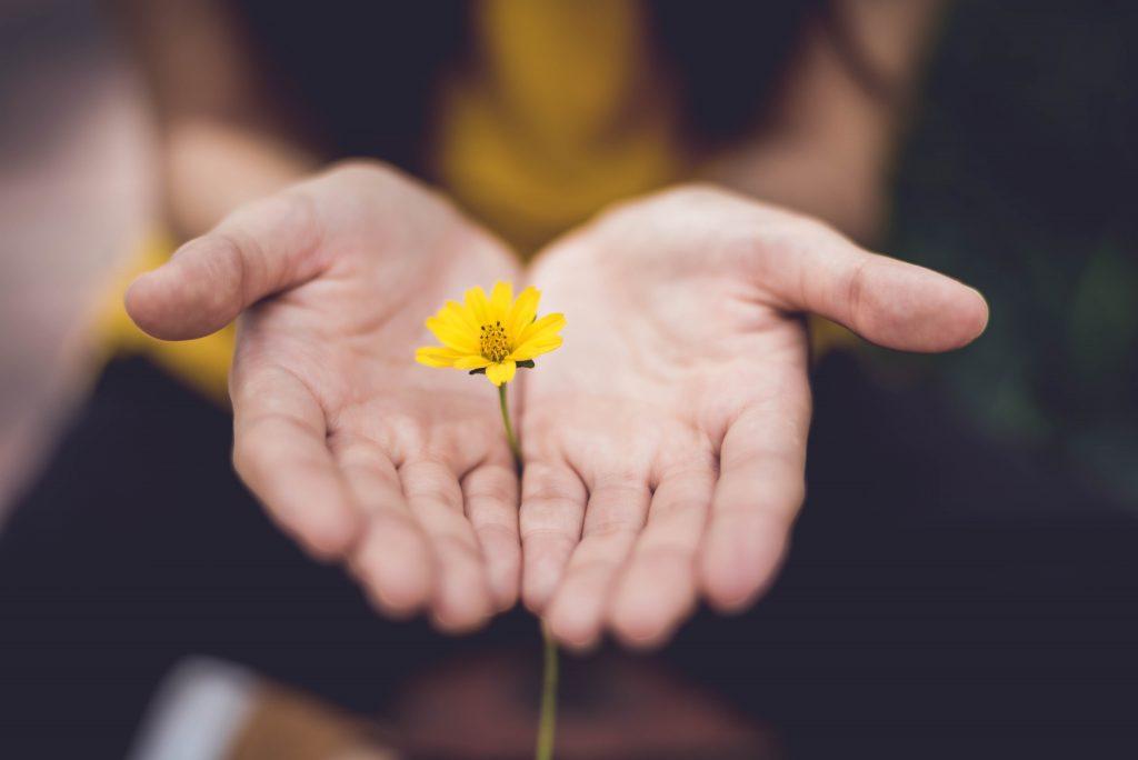 Woman Hands Holding Flower
